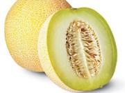 Cultivo de melón de alta tecnología eleva ingresos de agricultores vietnamitas