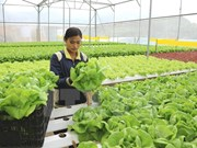 Vietnam con alta asistencia crediticia a agricultura de alta tecnología