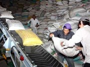 Filipinas realizará licitación para comprar 250 mil toneladas de arroz