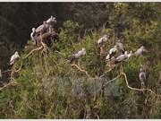 Miles de aves anidan en la isla de Hon Hai frente a la costa de Binh Thuan