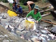 EE.UU. examinará envíos vietnamitas de pescado Tra a partir de agosto