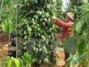 Altiplanicie Occidental de Vietnam busca alcanzar un desarrollo sostenible