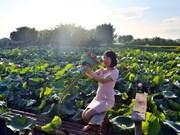 Reportaje: Ninh Xa, destino apacible para disfrutar el verano