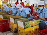 Vietnam prevé exportar frutas y verduras por tres mil millones de dólares en 2017