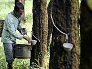 Tailandia promueve el uso de caucho