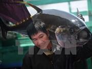 Exportaciones de atún de Vietnam a México crecen 125 por ciento