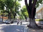 Hanoi prioriza la plantación de árboles