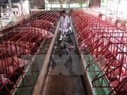 Vietnam lidera en ASEAN la producción de piensos para ganadería