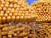 Vietnam gasta 1,7 mil millones de dólares en importación de maíz