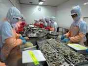Ha Tinh exporta 18 toneladas de camarones congelados a Malasia