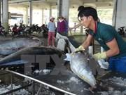 Vietnam ingresa más de cinco mil millones de dólares por venta de mariscos