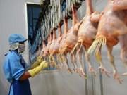 Exportarán primer lote de pollo vietnamita a Japón