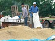 Gobierno tailandés busca estabilizar precios del arroz