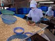 EE.UU. consolida posición como mayor importador de anacardo de Vietnam