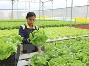 Provincia de Quang Nam continúa el desarrollo de nueva ruralidad