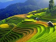 Amplio abanico de actividades en semana cultural de terrazas de arroz en Yen Bai