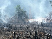 Indonesia impulsa en lucha contra incendios forestales