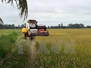 Vietnam optimizará sistema de producción arrocera