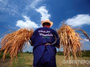 Tailandia estimula inversión en agricultura moderna