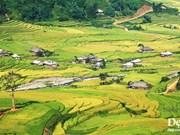 Inauguran semana cultural y festival de terrazas de arroz en provincia de Yen Bai