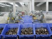 UE desplaza a Japón como mayor importador de camarones de Vietnam