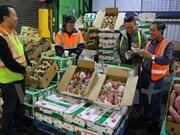 Pitahaya vietnamita llega a las tiendas de Australia