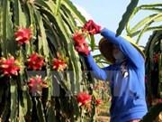 Ciudad vietnamita coopera con Japón en desarrollo de granja modelo