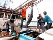 Aumentan valor de atún vietnamita en el mercado mediante la conexión en cadena