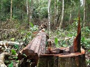Vietnam impulsa protección forestal con cambio de objetivos de uso