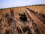 Cambio climático causará en Vietnam 250 mil muertes al año
