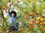 Vietnam impulsa aplicación de tecnologías para modernización rural