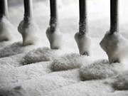 Vietnam exporta 43 mil toneladas de azúcar en 10 meses de 2017