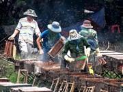 Vietnam busca impulsar exportación de miel a Unión Europea