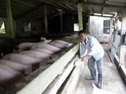 Empresa vietnamita busca penetrar en mercado sudcoreano de carne porcina