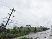 Vietnam registra grandes pérdidas por el tifón Damrey