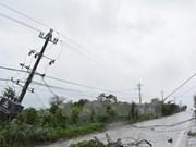 Aumenta número de muertos por tifón Damrey en Vietnam