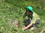 ASEAN debe incrementar la inversión verde en 400 por ciento cada año
