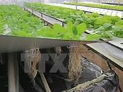 Empresa sudcoreana estudia invertir en agricultura en Vietnam