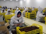 Argelia busca exportar dátil a Vietnam