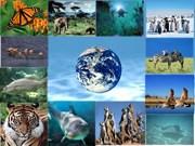 Efectúan seminario sobre cambio climático y biodiversidad en Vietnam