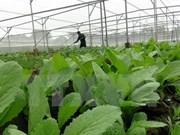 Vietnam adquiere experiencias de Japón en gestión agraria