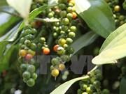 Vietnam busca aumentar valor del sector cafetero