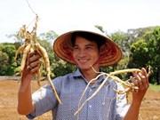 UE financia proyecto de gestión de plantas medicinales tradicionales en provincia vietnamita