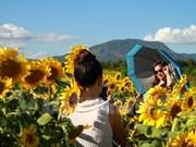Promoverán productos agrícolas y turísticos de Lam Dong en Festival de Flores Da Lat