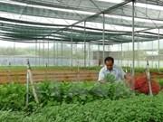Vietnam coopera con Japón en mejoramiento de cadenas de producción agrícola limpia