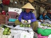 Provincia sudvietnamita exportará primer lote de caimito a Estados Unidos
