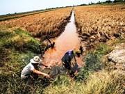 Buscan aumentar capacidad de adaptación al cambio climático en Delta del Mekong
