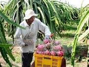 Valor de exportaciones vietnamitas de frutas y verduras alcanza nuevo récord