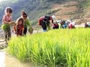 Vietnam aplica severas penas a empleadores de trabajadores infantiles