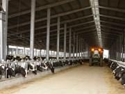 Granjas de TH True Milk en Rusia reciben primer rebaño de vacas estadounidenses